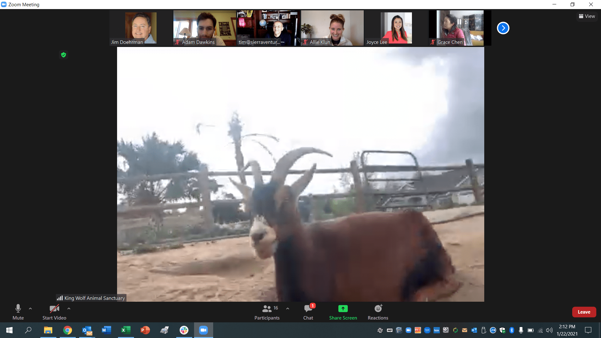Virtual Animal Sanctuary Tour with King Wolf Animal Sanctuary and Sierra Ventures